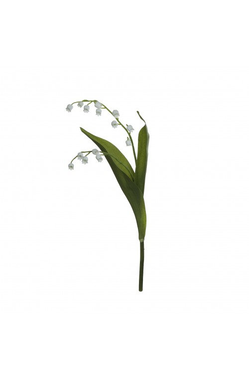 ΛΟΥΛ.LILY OF VALLEY H? GR/WH