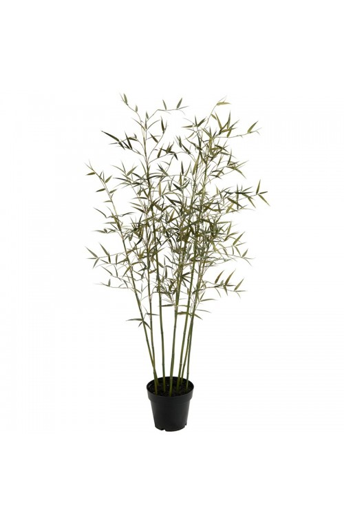 ΔΕΝΤΡΟ BAMBOO PLS POT H150 GR