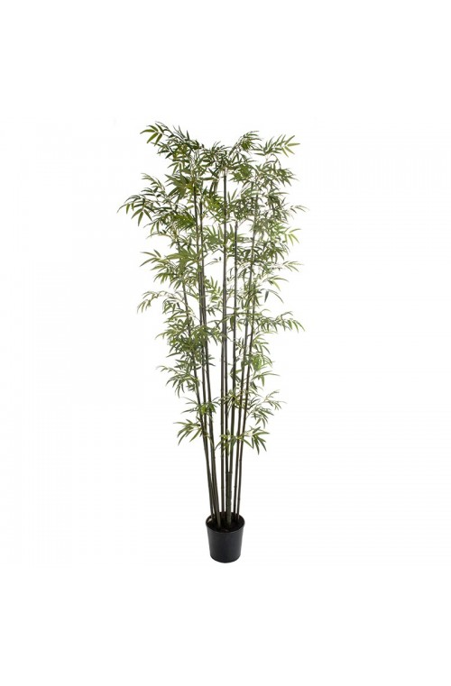 ΔΕΝΤΡΟ BAMBOO PLS POT H213 GR
